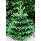 Nordmannsgran 1,00m juletræ