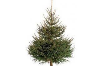 Rødgrantræ 1,25m juletræ