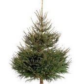 Rødgrantræ 2,25m juletræ